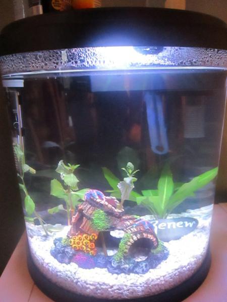 Top Fin Enchant Aquarium Petsmart Betta Fish Forum