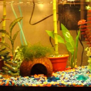 10G current home of approx 60 guppy fry and 2 otos