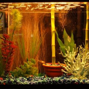 10G This is the current home of my remaining adult guppies and 2 otos