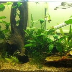 The strohi tank, as it currently is - a little bit messy but moving house soon, so I'm not too worried about it.