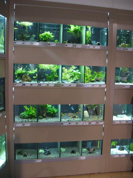 Amazing pet store in vienna austria betta fish and for The fish store